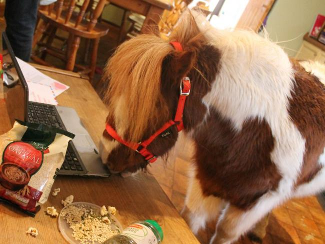The idea was thought up by Hamish the Shetland Pony who was reportedly interested in becoming Santa's latest reindeer