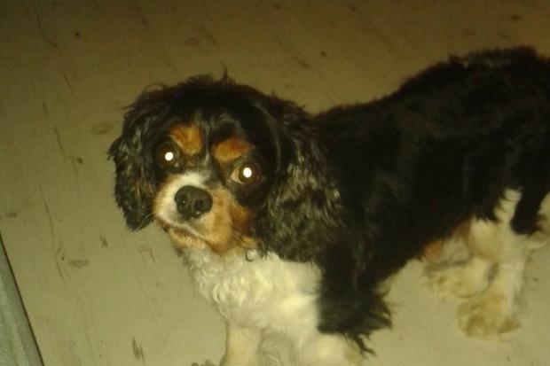 Alfie was found with his paws bound by a passer-by near Allandale, Stirlingshire.