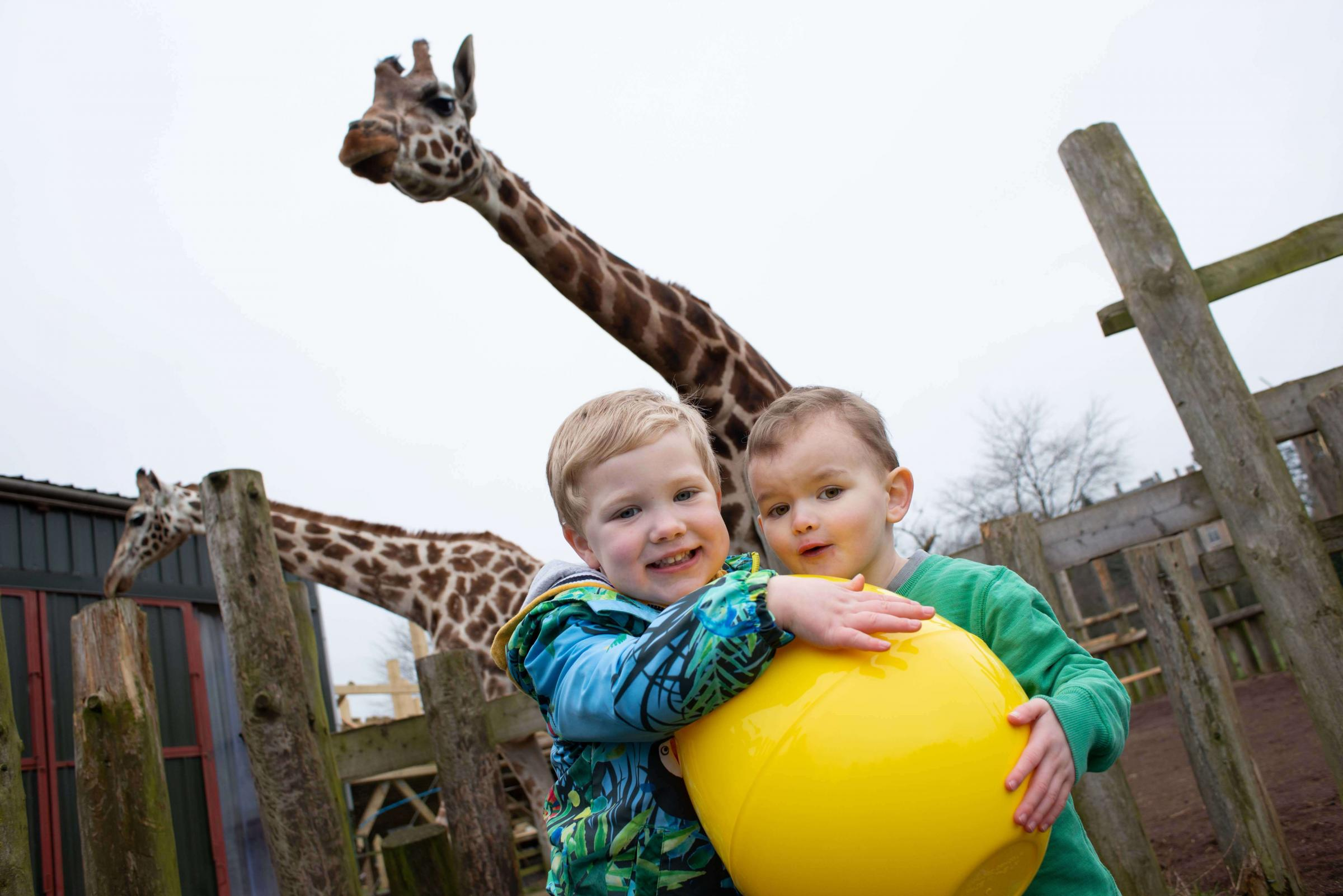 3-year-olds Jamie and Ethan (L-R) celebrate Easter with the giraffes at Blair Drummond Safari and Adventure Park