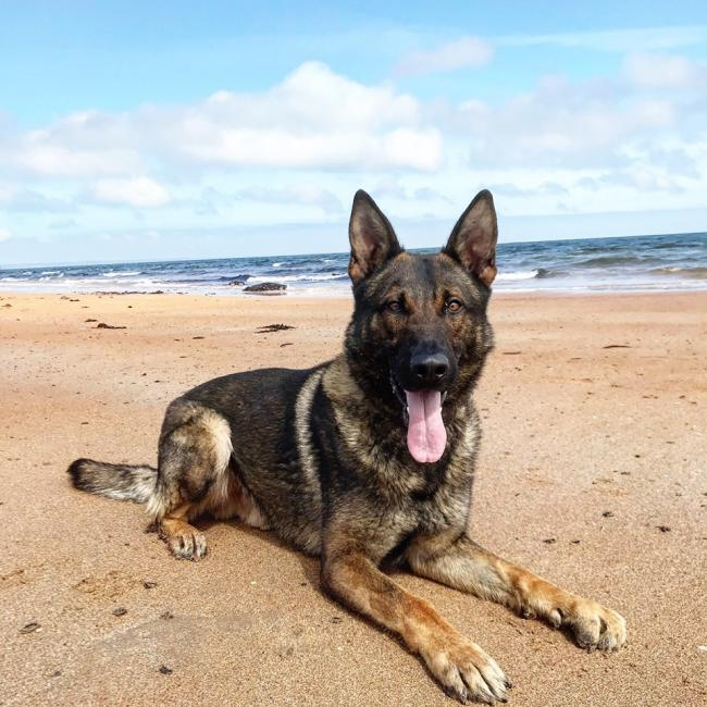 PD Chase bravely chased the man through Alloa